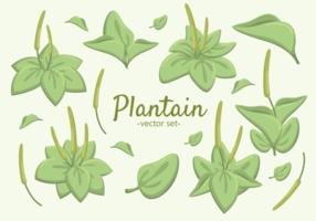 Superbes vecteurs de plantes à plantain vecteur