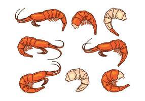 Icône de vecteur de crevettes