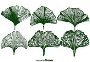 Vector Ensemble de feuilles de Gingko