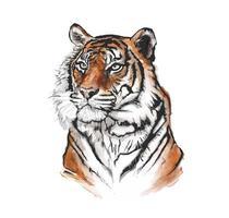 ketch coloré du visage d'un tigre vecteur