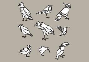 Ensemble de différents types d'oiseaux