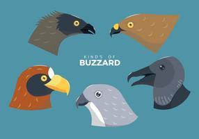 Buzzard oiseau tête vecteur Illustration