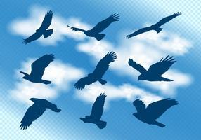 buzzard en silhouette de vol vecteur