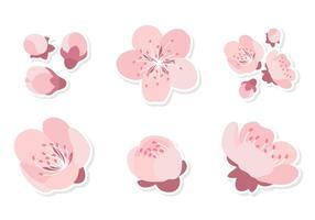 Fleur de prunier rose vecteur