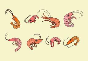 Vecteur de crevettes de dessin animé
