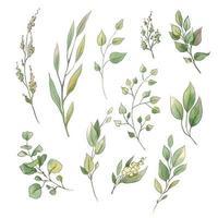 ensemble de feuilles et de fleurs tendres aquarelle
