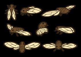 vecteurs de cigale vecteur