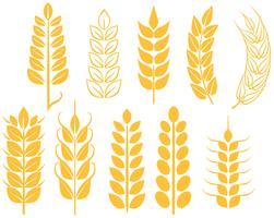 Vecteurs de blé gratuits vecteur