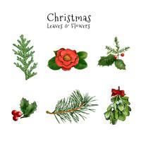 Collection de feuilles et de fleurs de Noël mignon vecteur