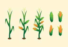 Vecteurs simples de tige de maïs vecteur