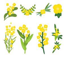 Vecteur gratuit de fleurs de canola