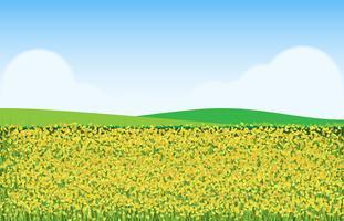 Fleurs de moutarde dans l'Illustration de champ vecteur