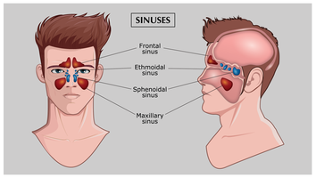 Vecteur de sinus gratuit
