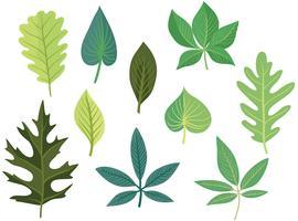 Vecteurs de feuilles vertes gratuites vecteur