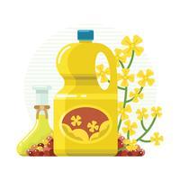 Vecteur de l'huile de canola