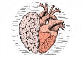 Cerveau vecteur dessiné à la main et illustration de coeur