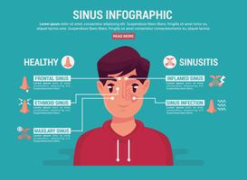 Sinus infographique