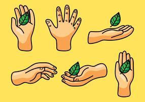 Mains avec des feuilles de fines herbes vecteur