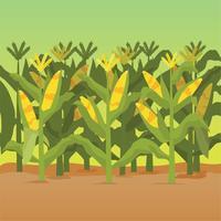 Illustration de tiges de maïs vecteur