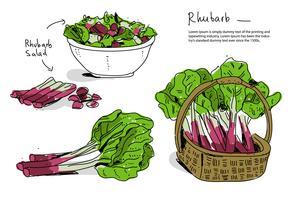 Illustration vectorielle de rhubarbe fraîche dessinés à la main vecteur