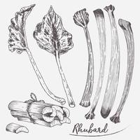 Rhubarbe Set Illustration Vector