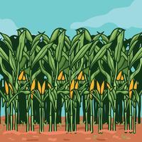 Tiges de maïs sur l'illustration de la ferme vecteur