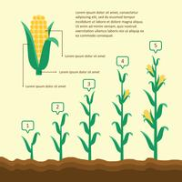 Grandir l'illustration de maïs vecteur