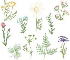Vecteurs de Doodle Herbs gratuits vecteur