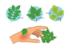 poison ivy oak sumac éruption cutanée vecteur