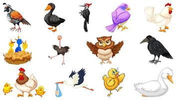ensemble de style de dessin animé différents oiseaux isolé sur fond blanc vecteur