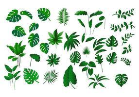 collection de feuilles tropicales vecteur