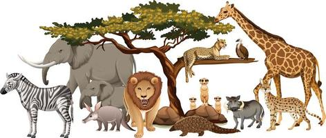 Groupe d'animaux sauvages africains sur fond blanc