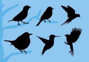 Illustration vectorielle d'oiseaux Siluetas