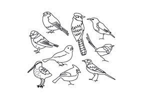 Dessins d'oiseaux vecteur