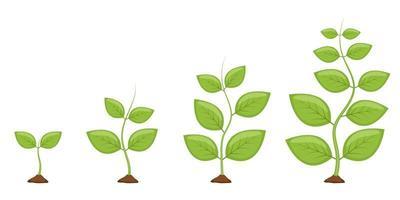 étapes de croissance des plantes vector illustration de conception