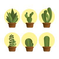 Set plat succulent