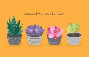 Collection succulente vecteur