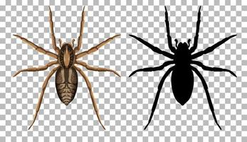 Araignée-loup avec sa silhouette isolée sur fond transparent