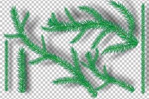 branches d'arbres de Noël sur fond de transparence