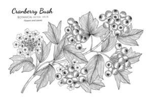 buissons d'art de ligne de canneberges dessinés à la main vecteur
