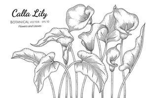fleur de lys calla et feuille dessinés à la main, dessin au trait botanique vecteur