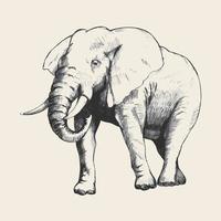 illustration de croquis d'éléphant vecteur