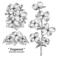 croquis ensemble décoratif floral. dessins de fleurs de cornouiller. dessin au trait noir isolé sur fond blanc. illustrations botaniques dessinées à la main. vecteur d'éléments.