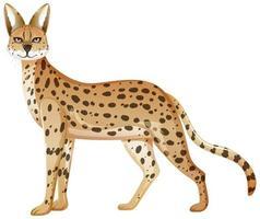 animal serval isolé sur fond blanc vecteur
