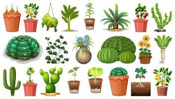 ensemble de différentes plantes en pots isolé sur fond blanc vecteur