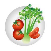 conception de vecteur de légume céleri et tomate