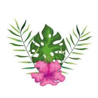 hibiscus belle couleur rose avec des branches et des feuilles, nature tropicale, botanique printemps été vecteur