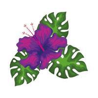 hibiscus belle couleur pourpre avec des feuilles, nature tropicale, botanique printemps été vecteur