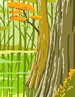 Parc national de Congaree en Colombie Caroline du Sud