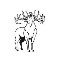 Red Deer Cervus elaphus rugissant vu de pochoir avant rétro noir et blanc vecteur